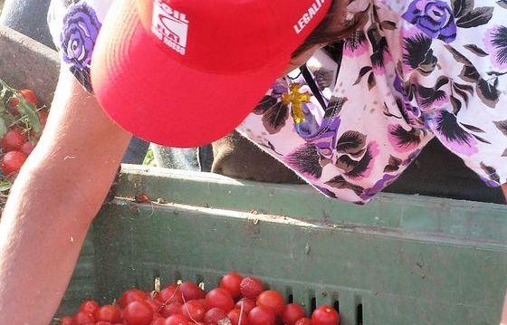 Rinnovo contratto integrativo agricoltura privata grave for Rinnovo contratto affitto